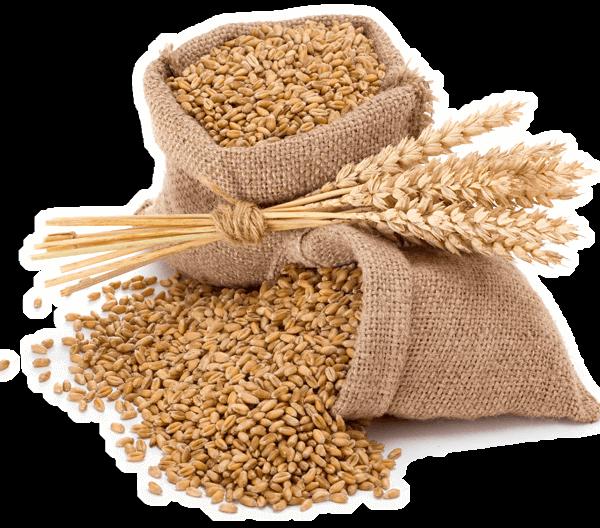 home-adaglio-sementi-prodotti-settori-t